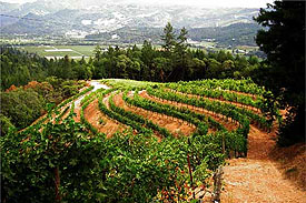 Atlas Peak Terraced Vineyard