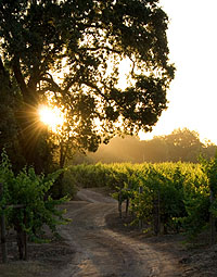 Sunset in Sonoma