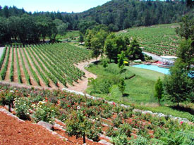 Diamond Creek's Three Vineyards