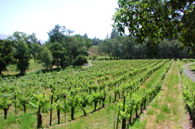 Diamond Creek's Gravelly Meadow Vineyard