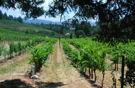 Diamond Creek's Volcanic Hill Vineyard
