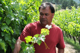 Vineyard Manager Carlos Mendez