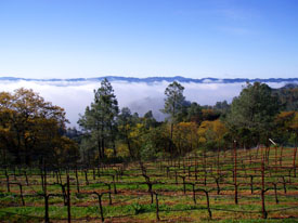 Robert Craig's Howell Mountain Vineyard