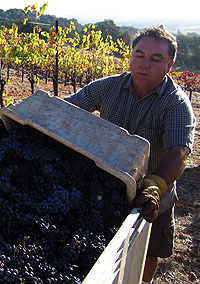 Vineyard Manager Ramon Pulido (Credit: Afsoon Razavi)